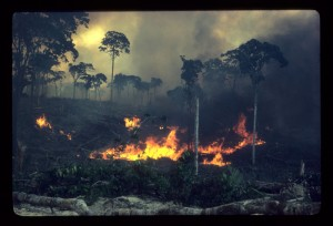 Amazon Forest Fire in 'A Fierce Green Fire'